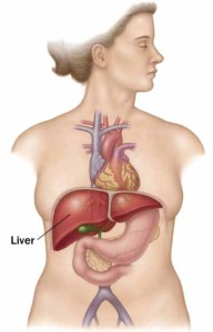 How To Take Care Of Your Liver?